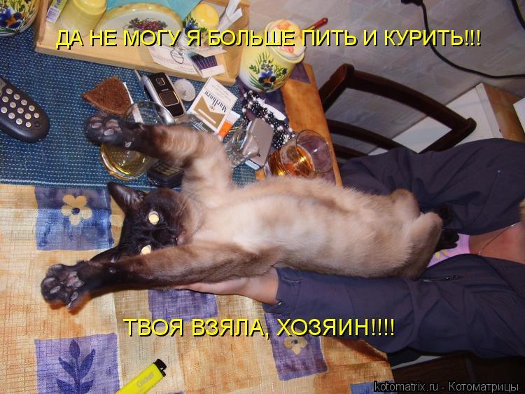 Котоматрица: ДА НЕ МОГУ Я БОЛЬШЕ ПИТЬ И КУРИТЬ!!! ТВОЯ ВЗЯЛА, ХОЗЯИН!!!!