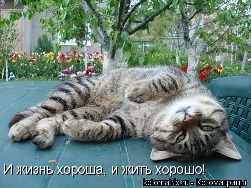Котоматрица: И жизнь хороша, и жить хорошо!
