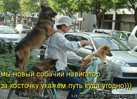 Котоматрица: мы-новый собачий навигатор за косточку укажем путь куда угодно)))