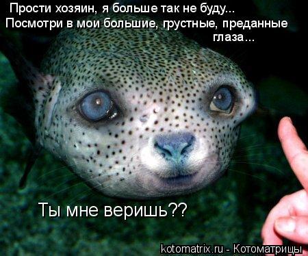 Котоматрица: Прости хозяин, я больше так не буду... Посмотри в мои большие, грустные, преданные  глаза... Ты мне веришь??