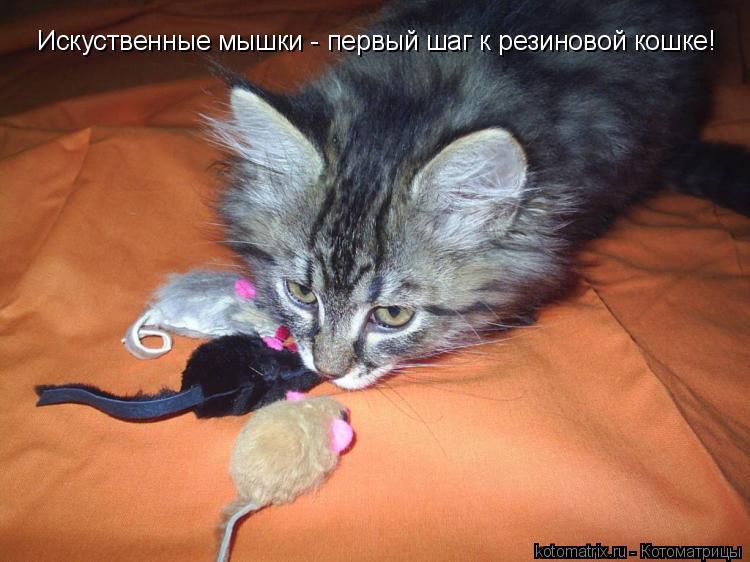 Котоматрица: Искуственные мышки - первый шаг к резиновой кошке!