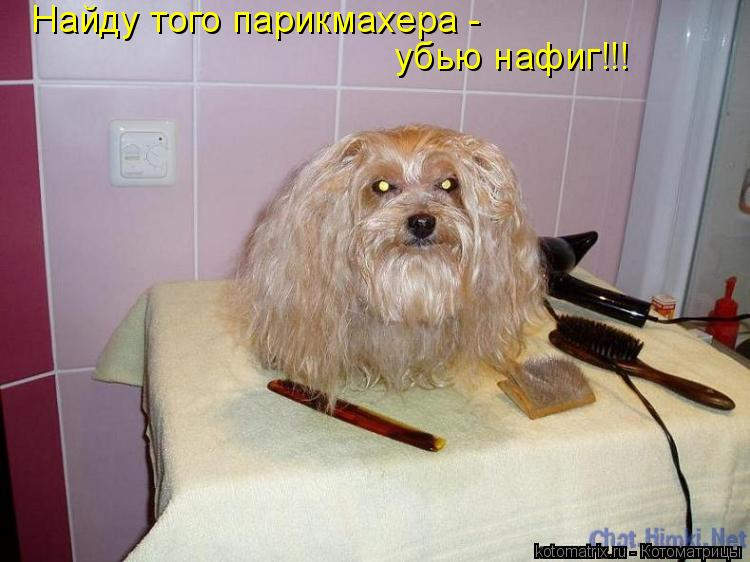 Котоматрица: Найду того парикмахера - убью нафиг!!!