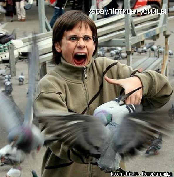 Котоматрица: караул!птицы-убийцы!