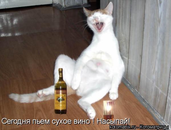 Котоматрица: Сегодня пьем сухое вино ! Насыпай!