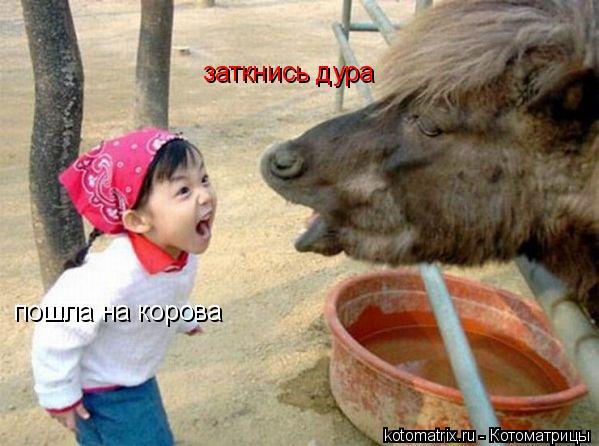 Котоматрица: пошла на корова заткнись дура