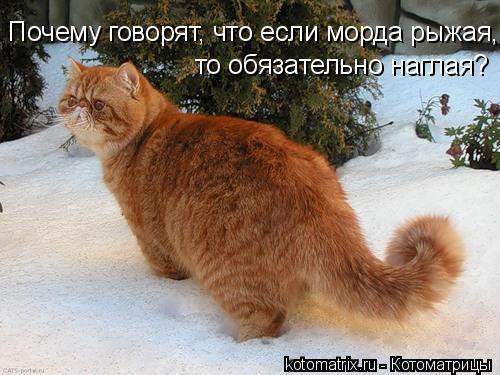 Котоматрица: Почему говорят, что если морда рыжая, то обязательно наглая?