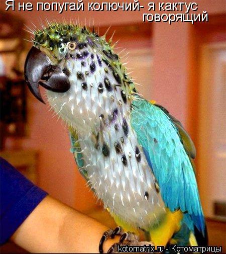 Котоматрица: Я не попугай колючий- я кактус говорящий