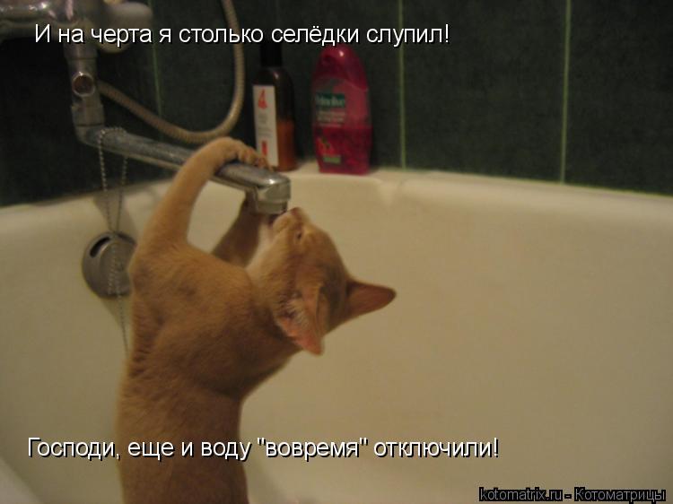 """Котоматрица: И на черта я столько селёдки слупил! Господи, еще и воду """"вовремя"""" отключили!"""