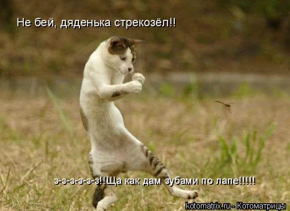 Котоматрица: Не бей, дяденька стрекозёл!! з-з-з-з-з-з!!Ща как дам зубами по лапе!!!!!