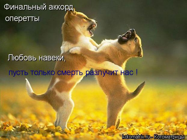 Котоматрица: Финальный аккорд оперетты Любовь навеки,  пусть только смерть разлучит нас !