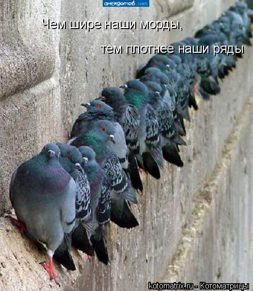 Котоматрица: Чем шире наши морды,  тем плотнее наши ряды