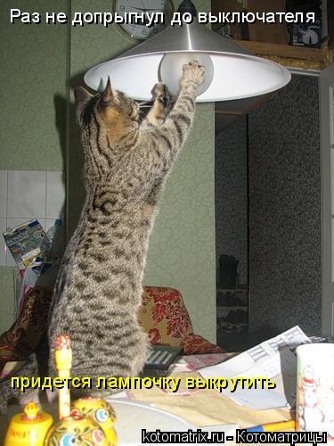 Котоматрица: Раз не допрыгнул до выключателя придется лампочку выкрутить