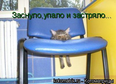 Котоматрица: Заснуло,упало и застряло...