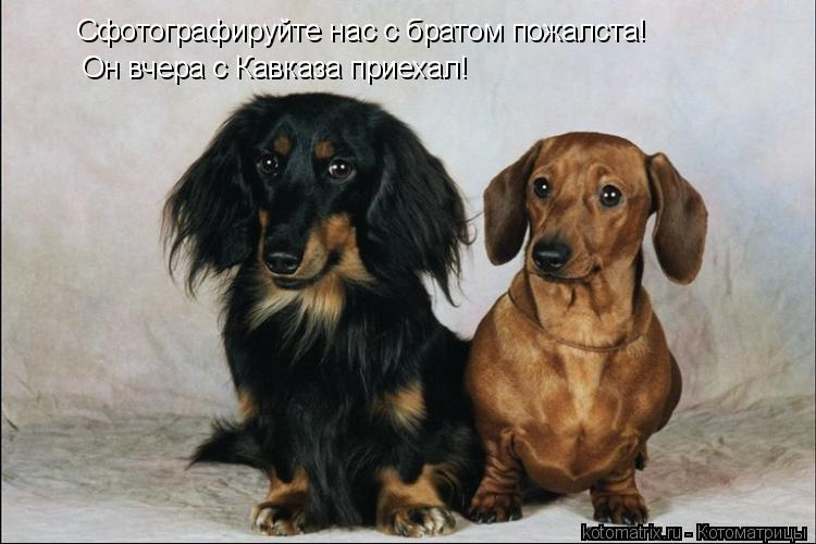 Котоматрица: Сфотографируйте нас с братом пожалста!  Он вчера с Кавказа приехал!