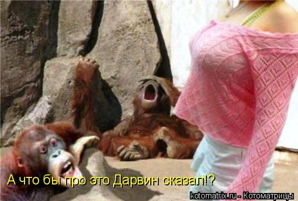Котоматрица: А что бы про это Дарвин сказал!?