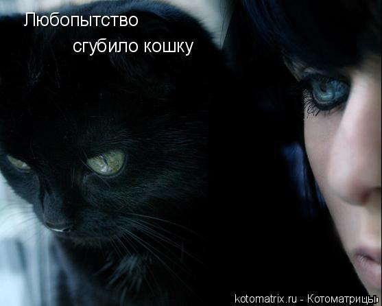 Котоматрица: Любопытство сгубило кошку