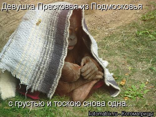 Котоматрица: Девушка Прасковья из Подмосковья с грустью и тоскою снова одна...