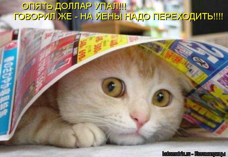 Котоматрица: ОПЯТЬ ДОЛЛАР УПАЛ!!! ГОВОРИЛ ЖЕ - НА ЙЕНЫ НАДО ПЕРЕХОДИТЬ!!!!