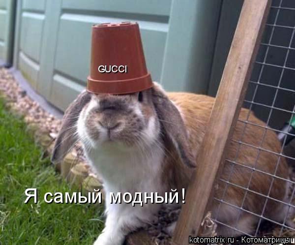 Котоматрица: GUCCI Я самый модный!