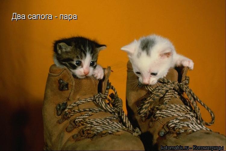 Котоматрица: Два сапога - пара