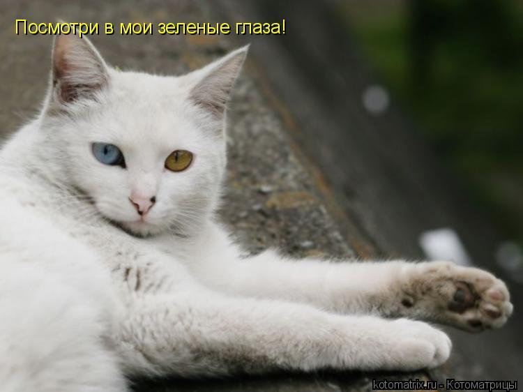 Котоматрица: Посмотри в мои зеленые глаза!