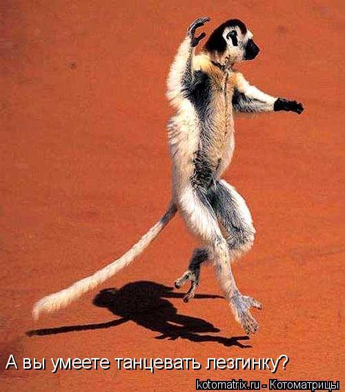 Котоматрица: А вы умеете танцевать лезгинку?