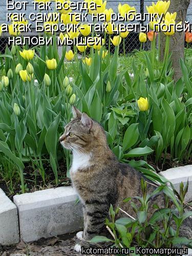 Котоматрица: Вот так всегда- как сами, так на рыбалку, а как Барсик- так цветы полей, налови мышей...