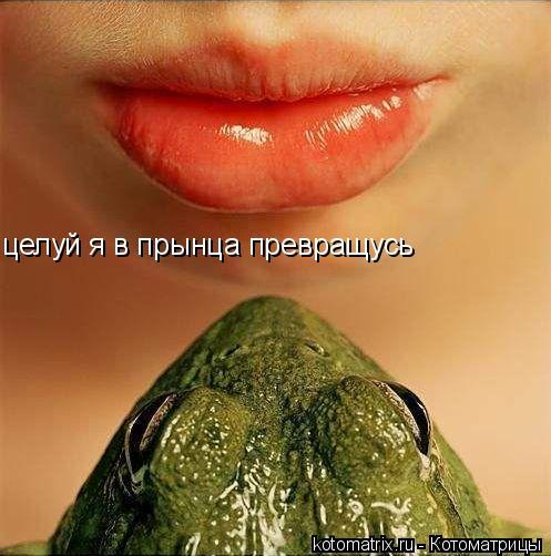Котоматрица: целуй я в прынца превращусь
