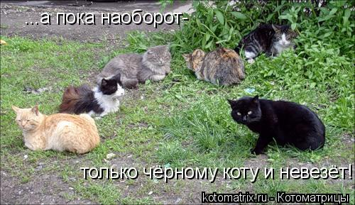 Котоматрица: ...а пока наоборот- только чёрному коту и невезёт!