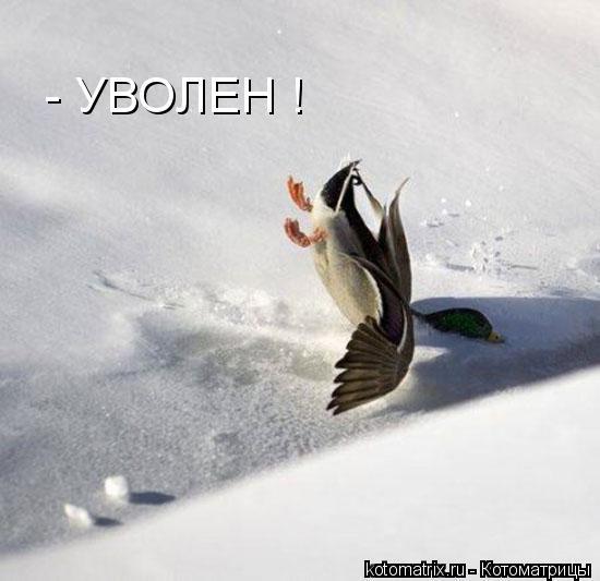 Котоматрица: - УВОЛЕН !