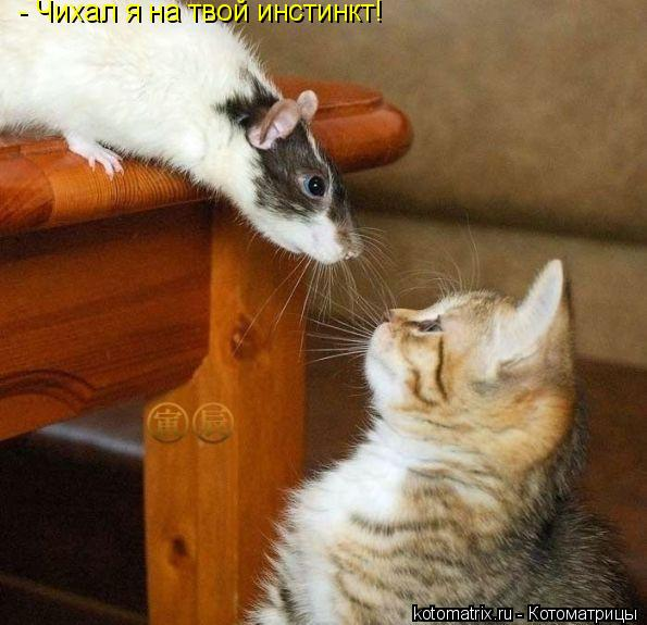 Котоматрица: - Чихал я на твой инстинкт!