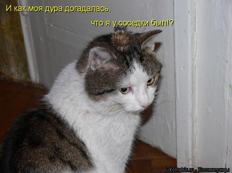 Котоматрица: И как моя дура догадалась, что я у соседки был!?