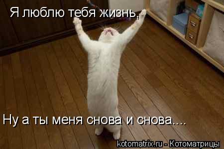 Котоматрица: Я люблю тебя жизнь, Ну а ты меня снова и снова....
