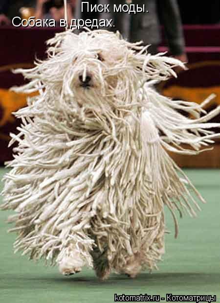 Котоматрица: Собака в дредах. Писк моды.