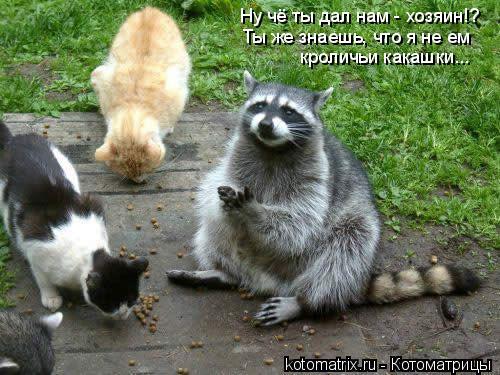 Котоматрица: Ну чё ты дал нам - хозяин!? Ты же знаешь, что я не ем кроличьи какашки...