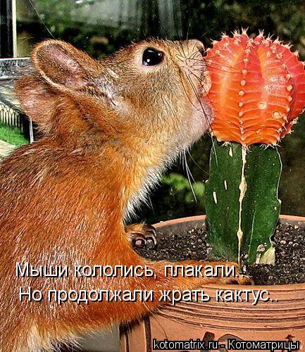 Котоматрица: Мыши кололись, плакали.. Но продолжали жрать кактус..