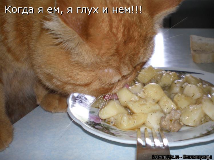 Котоматрица: Когда я ем, я глух и нем!!!