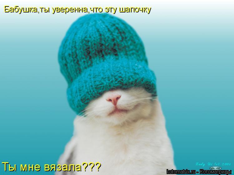 Котоматрица: Бабушка,ты уверенна,что эту шапочку Ты мне вязала???