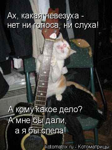 Котоматрица: Ах, какая невезуха - нет ни голоса, ни слуха! А кому какое дело? А мне бы дали, а я бы спела!