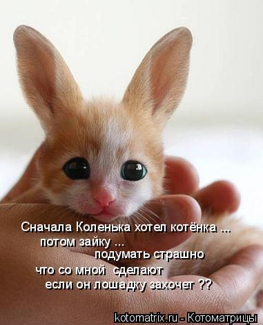 Котоматрица: Сначала Коленька хотел котёнка ... потом зайку ... что со мной  сделают если он лошадку захочет ?? подумать страшно