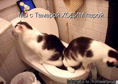 Котоматрица: Мы с Тамарой ХОДИМ парой...