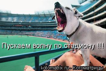 Котоматрица: Пускаем волну по стадиону !!!