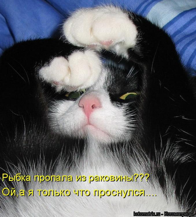 Котоматрица: Рыбка пропала из раковины??? Ой,а я только что проснулся....