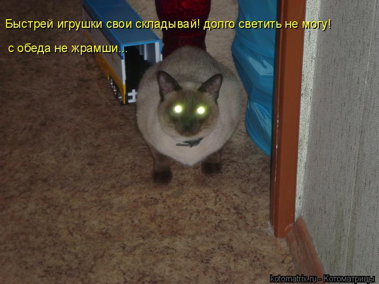 Котоматрица: Быстрей игрушки свои складывай! долго светить не могу! с обеда не жрамши...