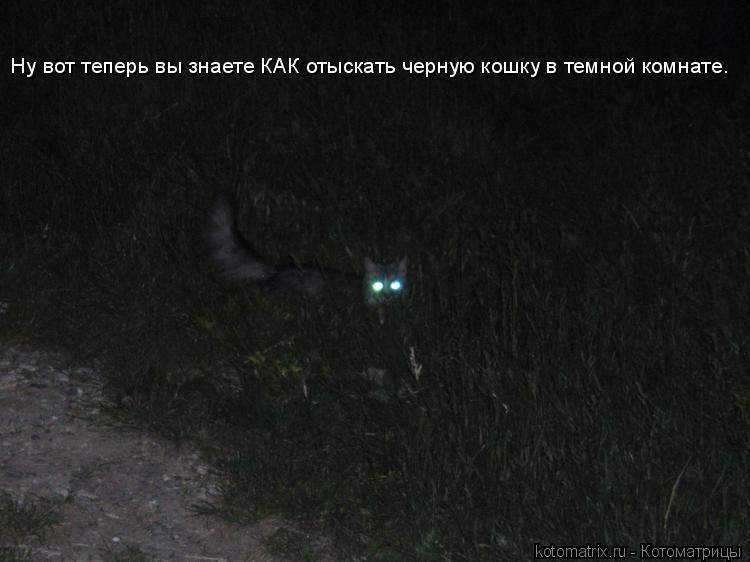 Котоматрица: Ну вот теперь вы знаете КАК отыскать черную кошку в темной комнате.