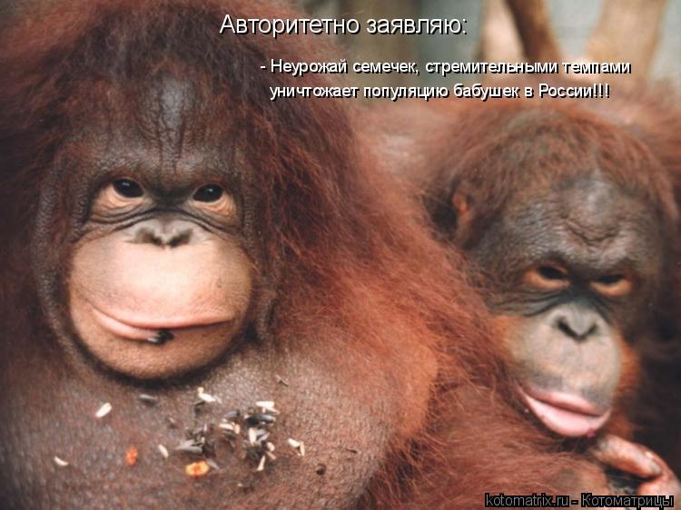 Котоматрица: Авторитетно заявляю: - Неурожай семечек, стремительными темпами уничтожает популяцию бабушек в России!!!