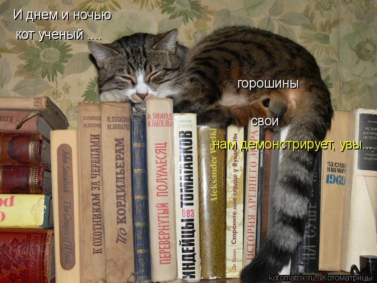 Котоматрица: И днем и ночью  кот ученый .... горошины свои нам демонстрирует, увы...