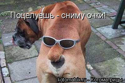 Котоматрица: Поцелуешь - сниму очки!