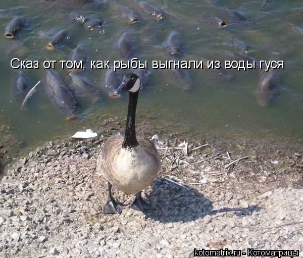 Котоматрица: Сказ от том, как рыбы выгнали из воды гуся