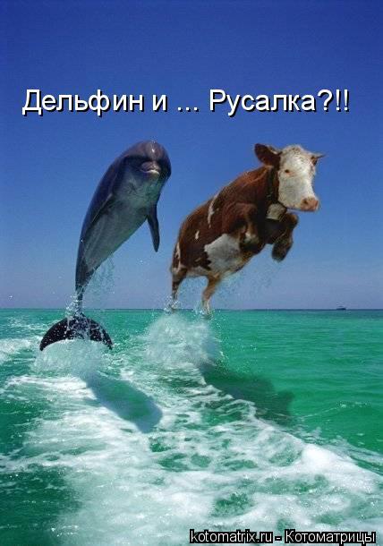 Котоматрица: Дельфин и ... Русалка?!!